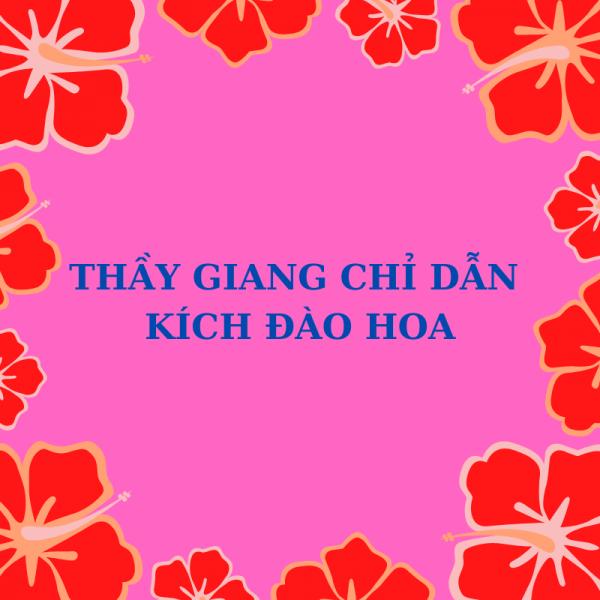 Cam Hoa Tiệc Đồ họa Mạng xã hội